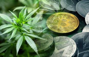 Solution Cannabis Payments Issues